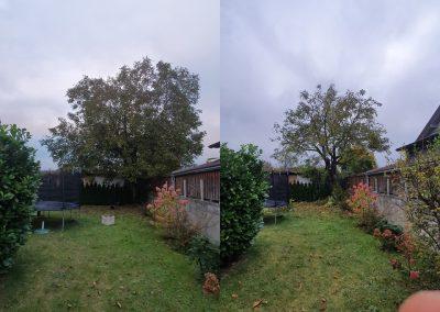 Vorher:Nachher.. Einkürzung eines Walnussbaums.jpg