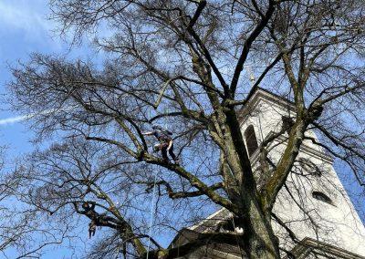 Baumpflege an der Kirche in Murg mit Lüthe GmbH