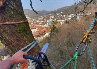Fällung am Steilhang in Waldshut